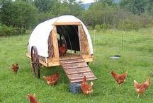 Family: Chicken Coops / by Dee & Doo™ ...with Megan too!