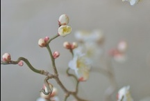 Blossom show stand / Inspiration for our stand at the National Wedding Show.  We'll be on stand F51 at the NEC from 4th - 6th October. / by The Tiny Card Company