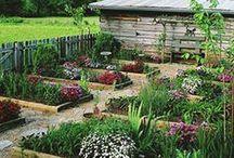 Home: Grow Food / by Jenny Prust