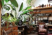 greenness / house & home plants / by Erin Nutsugah