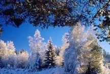 ❄☃ ωinтer ωonderland ☃❄ /  `•. ☆ .•´`•. ☆ ❄ The magic of Christmas ☃ `•. ☆ .•´`•. ☆  / by ★☆Danielle ✶ Beasy☆★
