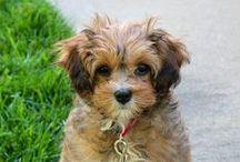 Puppy Love / by Deb Wolf