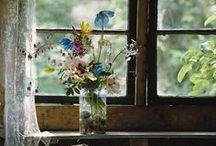 | FLOWERS | / by Meghan Laura