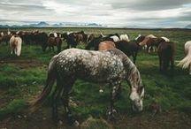| HORSE | / by Meghan Laura
