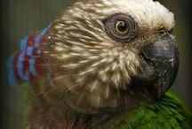Bird Watcher / by Ashley Ohnmeiss-Moyer