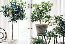 Plants / by Kristen