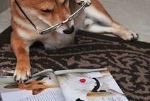 SUMMER READING 2014 / Paws to Read! / by Sacramento Public Library
