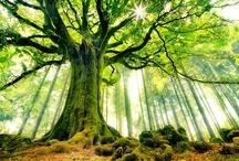 Trees / by Bek Andoloro