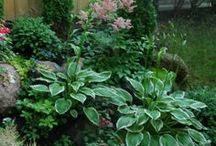 Garden / by Ritu Lacas