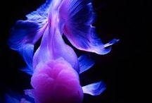Blue & Purple 青紫 / by Cathy Perez