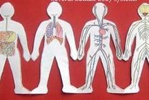 Human Anatomy & Physiology / by Tabitha Philen (Meet Penny)