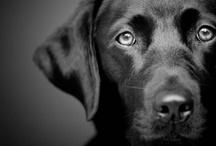 Dogs / by Paula Baker