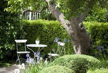 Garden / by Cheryl Hammill