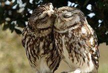 Owls / Wise & Wonderful / by Cheryl Hammill