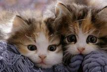 Kitty Cats / by Sandra A