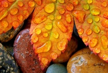 Fall / by Nancy Sproull