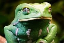 Reptiles, Amphibians and Gastropods / by Nancy Sproull