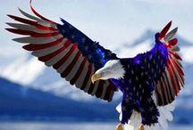 AMERICAN EAGLE / AMERICA, OUR NATION SYMBOL / by Joseph Gallant