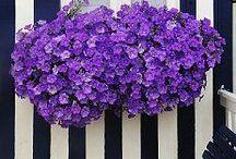 Purple / by Nilufer Turk