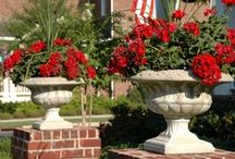 Westhaven Gardens / by Westhaven Community in Franklin, TN