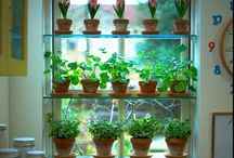 Apartment gardening  / by Shayla Smith