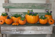 pumpkins and fall / by Tina Doddridge
