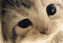 Kitty / by Plaidpoppy