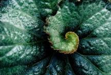 Plant love / by Plaidpoppy