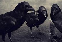 Birds / by Jane d'Albert Wilcoxson
