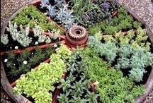 Ideas:  For the Garden....... / by Debbie Puksar