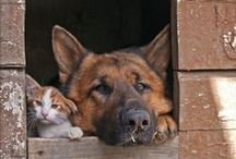 Likes:  Cute Cats and Dogs...... / by Debbie Puksar