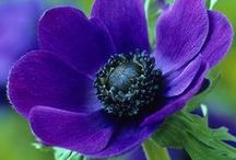 Purple Passion... / by Dawn Emling