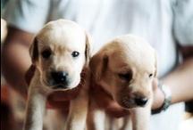 Puppy / by Bridgette Hall