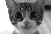 Kitties!! / by Melissa Pennock