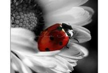 Butterflies, Ladybugs & Dragonflies / by Cindy Cox