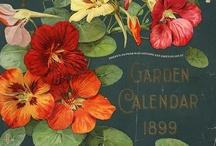 Garden / by Danette Haynes