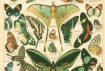 Naturalist Charts / by Lesann Berry