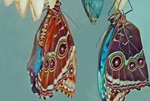 Butterflies (Paint Metal) / by Yana Gruntkovskaya