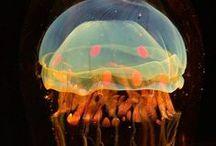 Jellyfish ≈D / by Yana Gruntkovskaya
