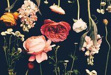 FoundLovely / by Zoee Davis