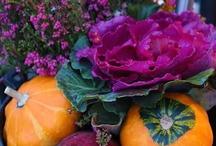 Autumn Ideas / by Alberta Stanek