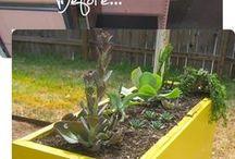 Gardening ideas/help / by Kathleen Markell