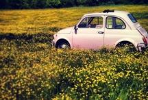 Cars_Fiat500 / by Masaki Kawato