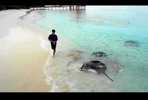 Underwater video / by Victor Tribunsky