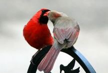 Beautiful Birds / Beautiful birds of all descriptions. / by Marsha ƸӜƷ