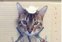 Meow Mix / by Kari Ness