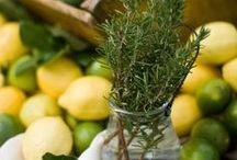 Herbs/Edible/Medicinal plants / by Marsha ƸӜƷ