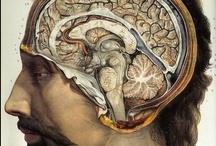 anatomies / shedding light on the inside of bodies since 2012 / by Josh Draper