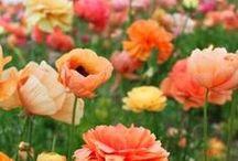 <3 Flowers = Happy <3 / by Mary White Joslin