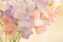 Flowers! / by Angela Leddy